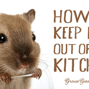 Four Ways to Keep Mice Out of the Kitchen