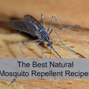 Recipes for Natural Mosquito Repellent