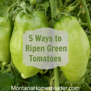 5 Ways to Ripen Green Tomatoes
