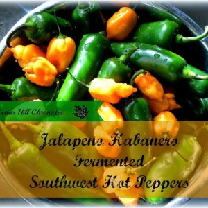 Southwest Hot Peppers ~ Fermented