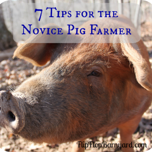 7 Tips for the Novice Pig Farmer