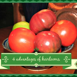 Advantages of Heirloom Varieties for the Home Gardener