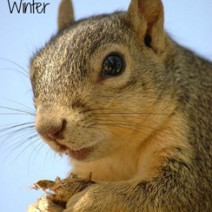 Tips for Helping Squirrels with Food for the Winter