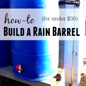 Building a Rain Barrel on a Budget
