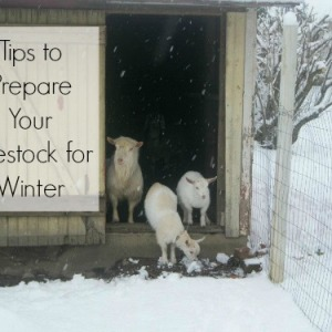 Tips on Preparing Livestock for the Winter