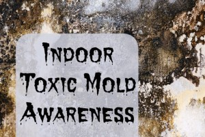 Toxic Mold How To Identify And Treat Indoor
