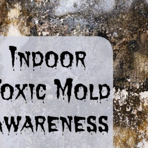 Toxic Mold: How to Identify and Treat Indoor Mold