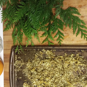 Earth to sky, The Medicinal Combination of Cedar and Oregon Grape