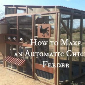 How to Make Automatic Feeders for your Chicken Coop