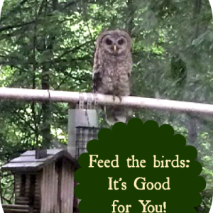 Feeding the Birds is Good for YOU!
