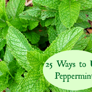 Peppermint:  It Warms, It Cools, It is a Wonderful Addition to Your Herb Garden