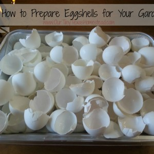How to Prepare Eggshells for Your Garden