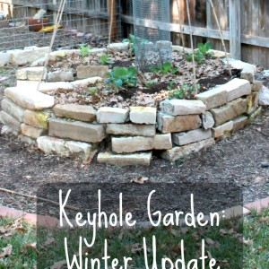 The Keyhole Garden in the Winter