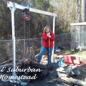 Homestead Progress to Inspire Self-Sufficient Living – Featuring 'Lil Suburban Homestead