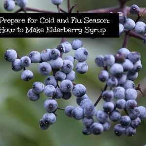 Make Your Very Own Elderberry Syrup