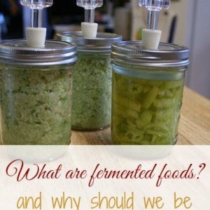 What are fermented foods, anyway?