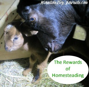 The Rewards of Homesteading Raising Goats