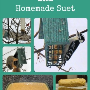 Feeding Birds in Winter and Easy Peanut Butter Suet