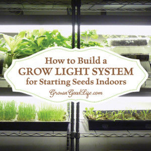 How to Set Up a Growing Area for Starting Seeds Indoors