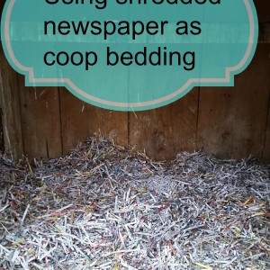 Using shredded newspaper in the chicken coop