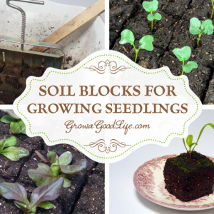 Growing Seedlings in Soil Blocks
