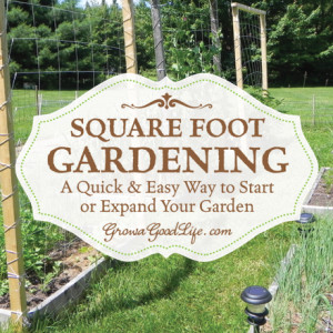 Square Foot Gardening: A Quick and Easy Way to Begin or Expand Your Garden