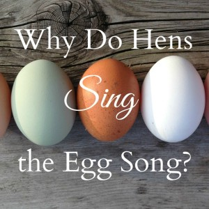 Why Do Hens Sing the Egg Song?