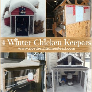 4 winter chicken keepers share their experiences