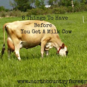 8 Things You Need Before You Get A Milk Cow