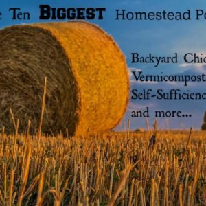 The Biggest Homestead Posts of the Year!