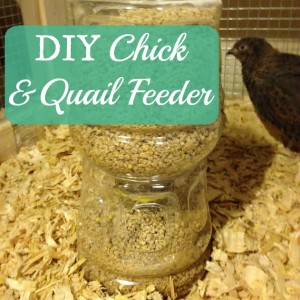 DIY Chick and Quail Feeder