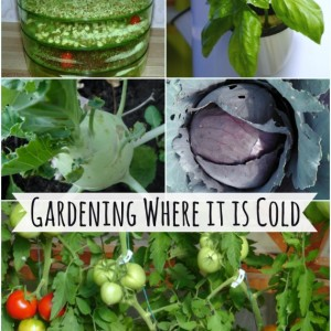 How to Grow Food in Cold Climate