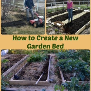 How to Start a New Garden
