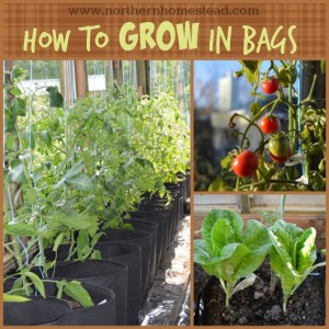 Grow a Container Vegetable Garden in Grow Bags