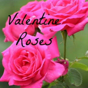 How to Grow Roses for your Valentine