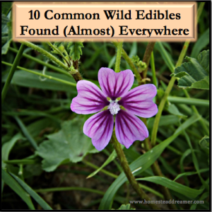 10 Wild Edibles Found (Almost) Everywhere