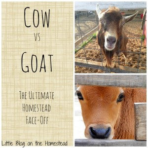 The Ultimate Homesteading Face-Off…Cow vs Goat!