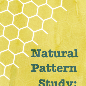 Natural Pattern Study: Hexagons