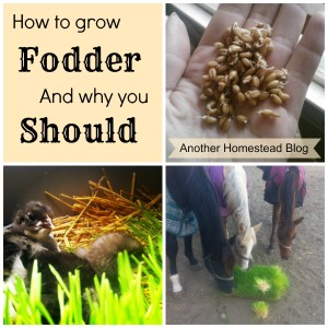 How to Grow Fodder Indoors, and Why You Should
