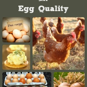Choices In Egg Quality