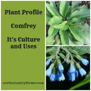 Plant Profile for Comfrey