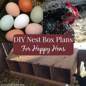 DIY Nest Box Plans For Your Chicken Coop