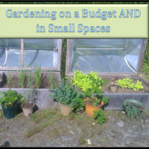 Gardening on a Budget AND in Small Spaces