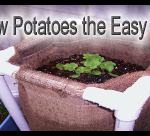 Growing Potatoes Has Never Been So Easy