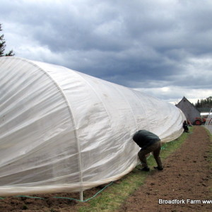 How to make an inexpensive caterpillar tunnel to extend your growing season