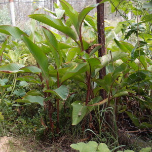 Growing a Perennial Vegetable Garden