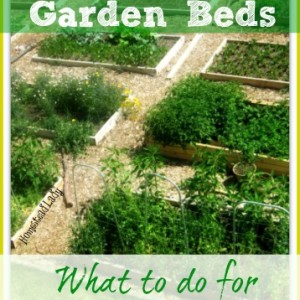 Raised Garden Beds: What to do in Early Spring