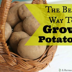 The Best Way To Grow Potatoes