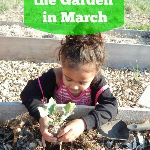 What to do in the Garden in March