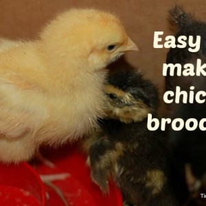 Making a Chick Brooder